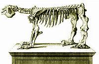MegatheriumSqueletteCuvier1812.jpg