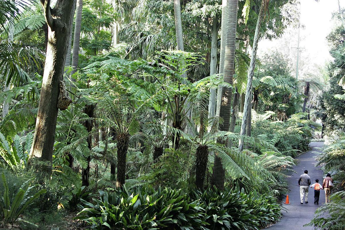 Royal botanic gardens victoria wikipedia for Botanic com jardin