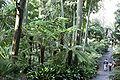 Melb botanical gardens03.jpg