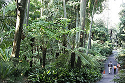 A section of the Fern Gully in the Royal Botanic Gardens