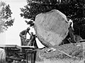 Men manoeuvring a piece of Kauri onto a truck (AM 75771-1).jpg