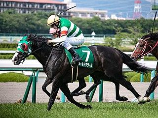 Naruo Kinen Japanese thoroughbred race