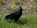 Merritt Island National Wildlife Refuge - Flickr - Rusty Clark (20).jpg