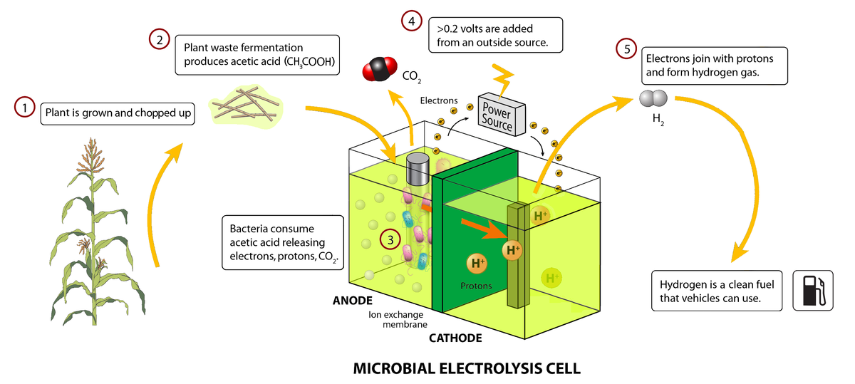 microbial electrolysis cell wikipedia. Black Bedroom Furniture Sets. Home Design Ideas