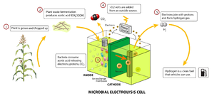 Hydrogen production - A microbial electrolysis cell