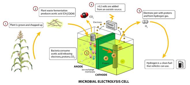 Mikrobielle Brennstoffzelle     Wikipedia