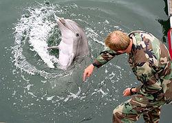 СМИ: Украина возобновила подготовку боевых дельфинов в Севастополе