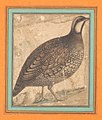 Miniature of a Partridge (Qajar art).jpg