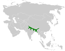 Mirafra assamica distribution map.png