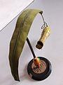 Modell von Nepenthes distillatoria (Kannenpflanze).jpg