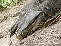 Monitor Lizard, Sungei Buloh Wetlands Reserve, Singapore (1668973827).jpg