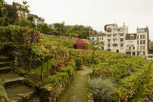 Montmartre Abbey - The Montmartre vineyard - all that remains of the abbey.