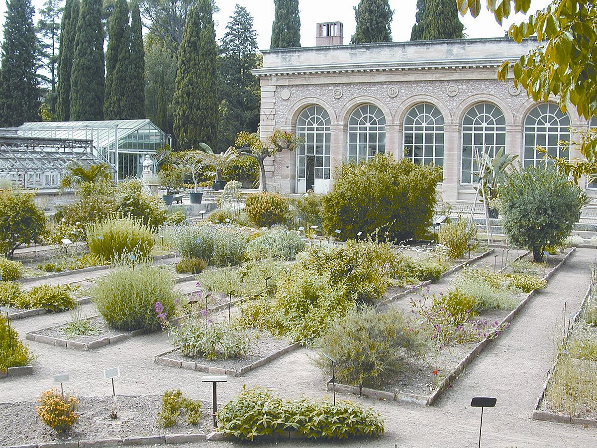 jardin des plantes de montpellier wikip dia. Black Bedroom Furniture Sets. Home Design Ideas