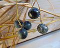 Moonseed fruit 2.jpg