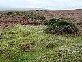 Moorland above Blaen-y-cwm - geograph.org.uk - 693920.jpg