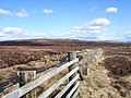 Moorland above Cross Gill - geograph.org.uk - 158439.jpg