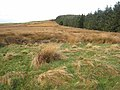 Moorland and plantation near Thorny Knowe - geograph.org.uk - 613860.jpg