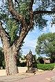 Morning Star Gallery - Canyon Road, Santa Fe, New Mexico, USA - panoramio (3).jpg