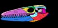 Mosasaurus hoffmannii skull schematic.png