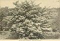 Mount Hope Nurseries established 1840 - general catalogue (1909) (14757753716).jpg