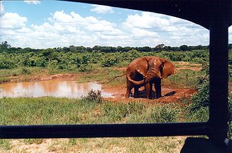 Wildlife tourism - Animals can be viewed in their native or similar environments, from vehicles or on foot. This elephant in Hwange National Park, Zimbabwe, was quite undisturbed by the people and vehicle.