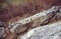 NÖ-Naturdenkmal HL-071 Granitblockstein und Umgebungsbereich sl1.jpg