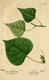 NAS-096 Populus deltoides & ssp monilifera.png