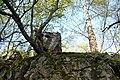 NSG Steinbruch Holzmühle (61).jpg