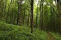 Nature reserve Žižkův vrch in summer 2012 (12).JPG