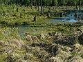Naturschutzgebiet Feerner Moor.jpg
