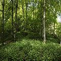 Naturschutzgebiet Hobelsberg Riesn 5.jpg