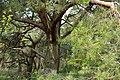 Naturschutzgebiet Mittleres Innerstetal mit Kanstein - Innerste bei Rhene - Uferwald (8).JPG