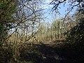 New woodland - geograph.org.uk - 1171345.jpg