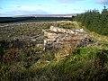 Newcastleton Forest on Blaemount Rig - geograph.org.uk - 608663.jpg