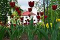Nisko wiosną.jpg