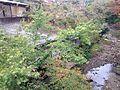 Notorigawa River from Notoribashi Bridge (east) 3.JPG