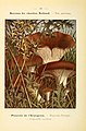 Nouvel atlas de poche des champignons comestibles et vénéneux (Pl. 30) (6459636521).jpg