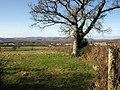 Oak and view near Sandslade Copse - geograph.org.uk - 1170640.jpg