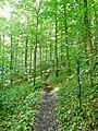 Oberschwaben Schwäbischer Alb Weg (HW7) - panoramio (1).jpg
