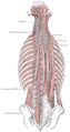 Obliquus capitis inferior muscle.png