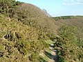 Offa's Dyke path through gorse, Panpunton Hill, Knighton - geograph.org.uk - 397760.jpg