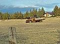 Old Truck In Field.jpg