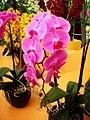 Orchid orton demo result.jpg