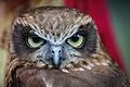 Owls @ Dragonheart, Enschede (9546663859).jpg