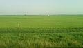 Paddy Fields near Kovvuru 09.jpg