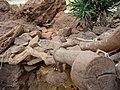 Paignton , Paignton Zoo, Desert Zone - geograph.org.uk - 1485168.jpg
