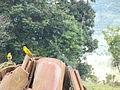 Pajaros posando sobre tejas en Buga rural.JPG