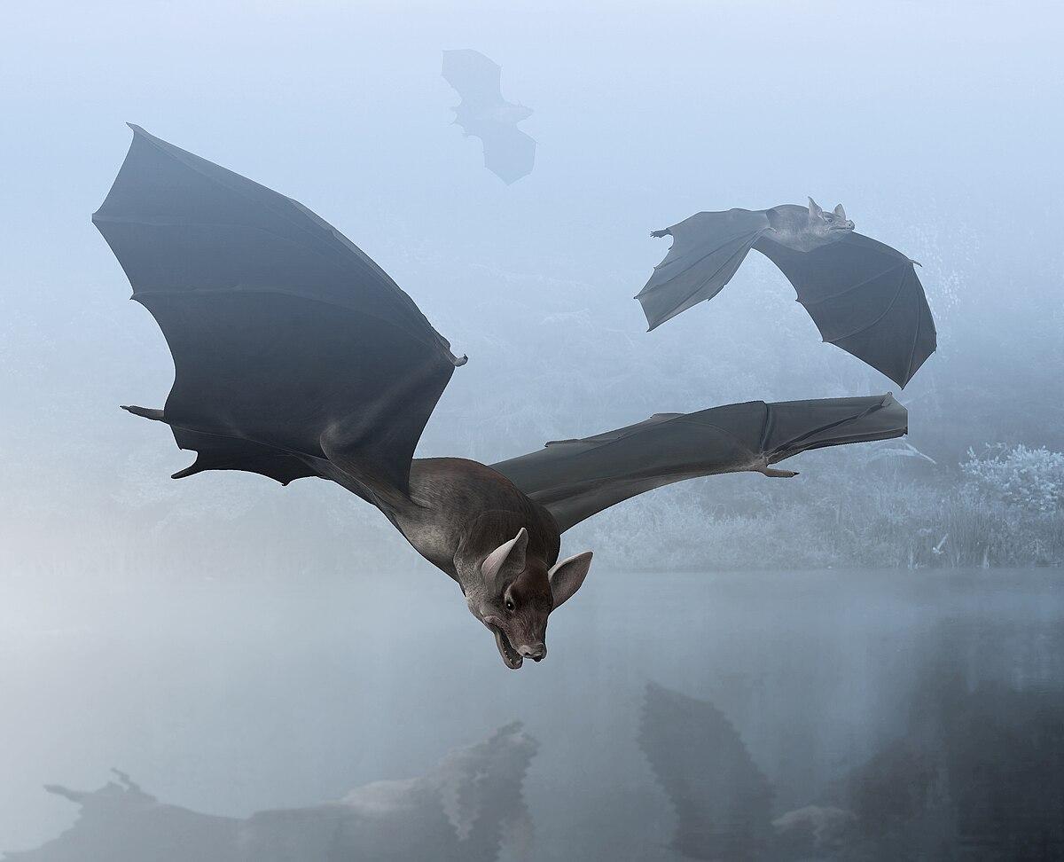 Palaeochiropteryx — Wikipédia Paleo