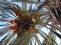 Palm Cyprus.JPG