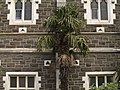 Palm on church wall.JPG